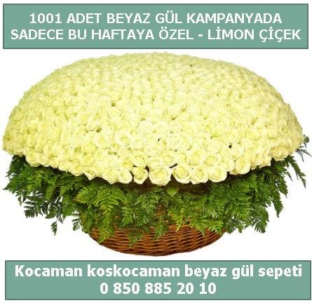 1001 adet beyaz gül sepeti özel kampanyada  Elazığ anneler günü çiçek yolla