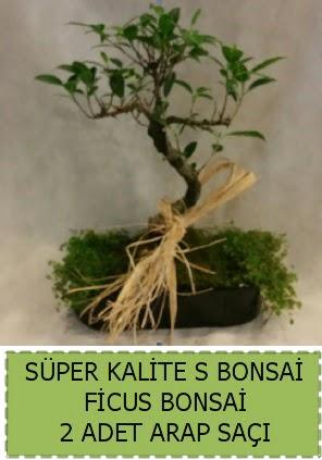 Ficus S Bonsai ve arap saçı  Elazığ çiçek servisi , çiçekçi adresleri