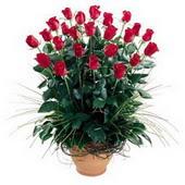 Elazığ ucuz çiçek gönder  10 adet kirmizi gül cam yada mika vazo