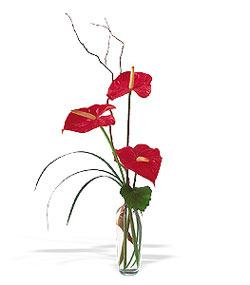 Elazığ çiçek yolla , çiçek gönder , çiçekçi   cam yada mika Vazoda 3 adet  antoryum