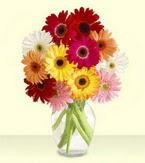 Elazığ uluslararası çiçek gönderme  cam yada mika vazoda 15 özel gerbera