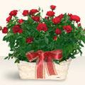 Elazığ 14 şubat sevgililer günü çiçek  11 adet kirmizi gül sepette