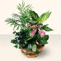 Elazığ çiçek mağazası , çiçekçi adresleri  5 adet canli çiçek sepette