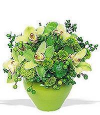 cam yada mika vazoda 5 adet orkide   Elazığ cicekciler , cicek siparisi