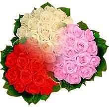 3 renkte gül seven sever   Elazığ kaliteli taze ve ucuz çiçekler