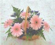 gerbera çiçeklerinde sepet   Elazığ hediye sevgilime hediye çiçek