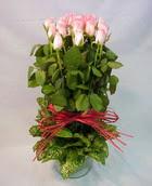 13 adet pembe gül silindirde   Elazığ hediye sevgilime hediye çiçek