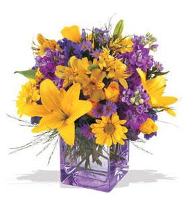 Elazığ internetten çiçek siparişi  cam içerisinde kir çiçekleri demeti