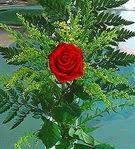 1 adet kirmizi gül buketi   Elazığ çiçek gönderme