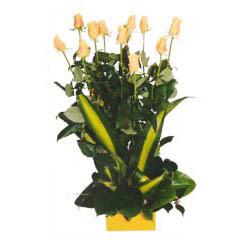 12 adet beyaz gül aranjmani  Elazığ çiçek siparişi vermek