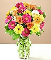Elazığ internetten çiçek satışı  17 adet karisik gerbera