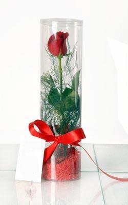 Elazığ hediye sevgilime hediye çiçek  Silindir vazoda tek kirmizi gül