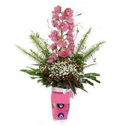 Elazığ yurtiçi ve yurtdışı çiçek siparişi  cam yada mika vazo içerisinde tek dal orkide çiçegi