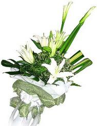 Elazığ online çiçek gönderme sipariş  3 dal kazablanka çiçegi ve yesillikler