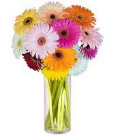 Elazığ çiçek yolla  Farkli renklerde 15 adet gerbera çiçegi