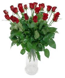 Elazığ çiçek servisi , çiçekçi adresleri  11 adet kimizi gülün ihtisami cam yada mika vazo modeli