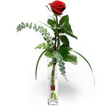 Elazığ hediye çiçek yolla  Sana deger veriyorum bir adet gül cam yada mika vazoda
