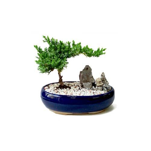 ithal bonsai saksi çiçegi  Elazığ çiçek online çiçek siparişi