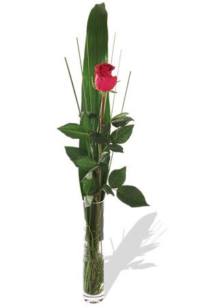 1 adet cam vazo içerisinde kirmizi gül  Elazığ kaliteli taze ve ucuz çiçekler