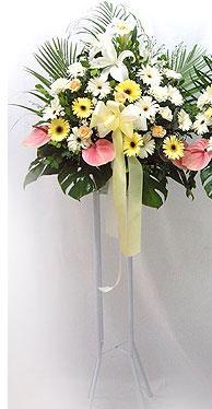 Elazığ çiçekçi telefonları   perförje çiçegi dügün çiçekleri