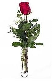 Vazo içerisinde 1 adet kirmizi gül  Elazığ çiçek , çiçekçi , çiçekçilik