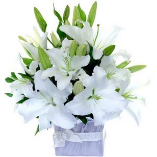 Elazığ hediye sevgilime hediye çiçek  2 dal cazablanca vazo çiçeği