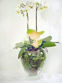 Elazığ çiçek mağazası , çiçekçi adresleri  Cam yada mika vazoda özel orkideler