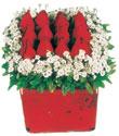 Elazığ çiçek online çiçek siparişi  Kare cam yada mika içinde kirmizi güller - anneler günü seçimi özel çiçek