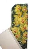 Elazığ çiçek online çiçek siparişi  Kutu içerisine dal cymbidium orkide