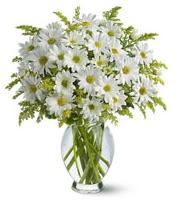 Vazo içerisinde beyaz krizantem çiçekleri  Elazığ online çiçekçi , çiçek siparişi