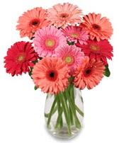 vazo içerisinde 13 adet gerbera çiçeği  Elazığ çiçek yolla , çiçek gönder , çiçekçi
