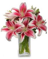 Vazo içerisinde 5 dal kazablanka çiçeği  Elazığ çiçek , çiçekçi , çiçekçilik