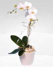 1 dallı orkide saksı çiçeği  Elazığ cicekciler , cicek siparisi