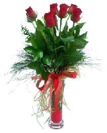 vazo içerisinde 5 kırmızı gül  Elazığ online çiçek gönderme sipariş