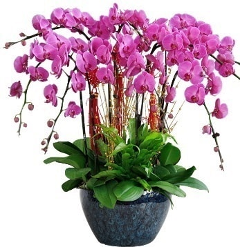 9 dallı mor orkide  Elazığ hediye çiçek yolla