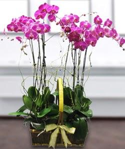 4 dallı mor orkide  Elazığ online çiçek gönderme sipariş