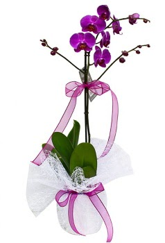 Tek dallı mor orkide  Elazığ çiçek servisi , çiçekçi adresleri
