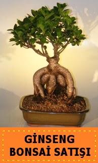 Ginseng bonsai satışı japon ağacı  Elazığ çiçek satışı
