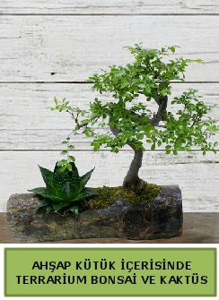 Ahşap kütük bonsai kaktüs teraryum  Elazığ çiçek yolla