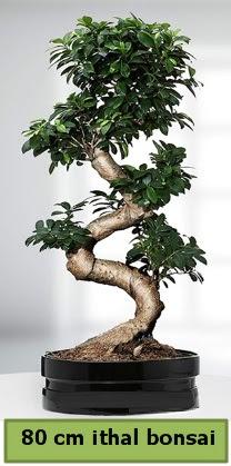 80 cm özel saksıda bonsai bitkisi  Elazığ çiçek servisi , çiçekçi adresleri