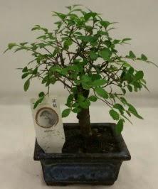 Minyatür ithal japon ağacı bonsai bitkisi  Elazığ çiçek mağazası , çiçekçi adresleri