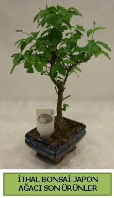 İthal bonsai japon ağacı bitkisi  Elazığ çiçek siparişi sitesi