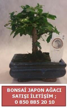 Japon ağacı minyaür bonsai satışı  Elazığ çiçek mağazası , çiçekçi adresleri