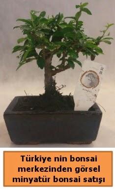 Japon ağacı bonsai satışı ithal görsel  Elazığ hediye sevgilime hediye çiçek