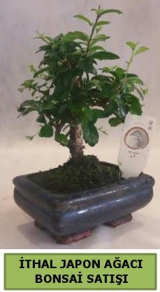 İthal japon ağacı bonsai bitkisi satışı  Elazığ çiçek servisi , çiçekçi adresleri