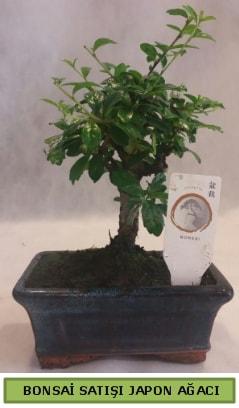 Minyatür bonsai ağacı satışı  Elazığ çiçek online çiçek siparişi