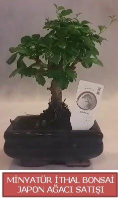 Küçük görsel bonsai japon ağacı bitkisi  Elazığ kaliteli taze ve ucuz çiçekler