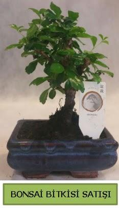 Bonsai ithal görsel minyatür japon ağacı  Elazığ güvenli kaliteli hızlı çiçek