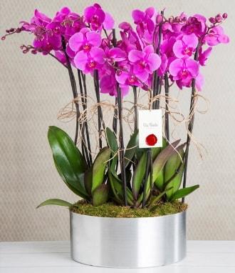 11 dallı mor orkide metal vazoda  Elazığ anneler günü çiçek yolla