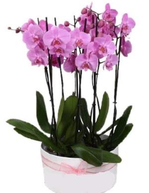 Beyaz seramik içerisinde 7 dallı mor orkide  Elazığ çiçek servisi , çiçekçi adresleri